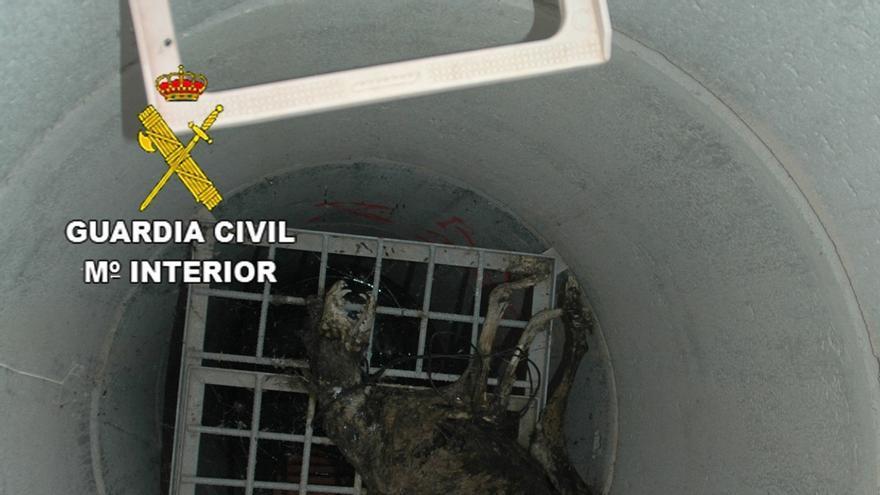 El cadáver del animal apareció en el interior de una tubería
