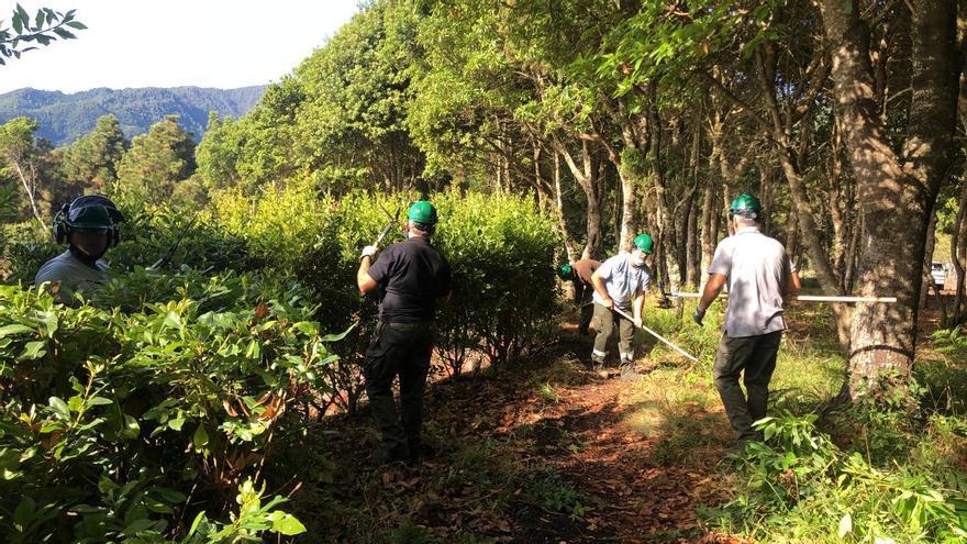 Barlovento pone en marcha el Programa de Formación y Alternancia con el Empleo 'Barlovento Florece'