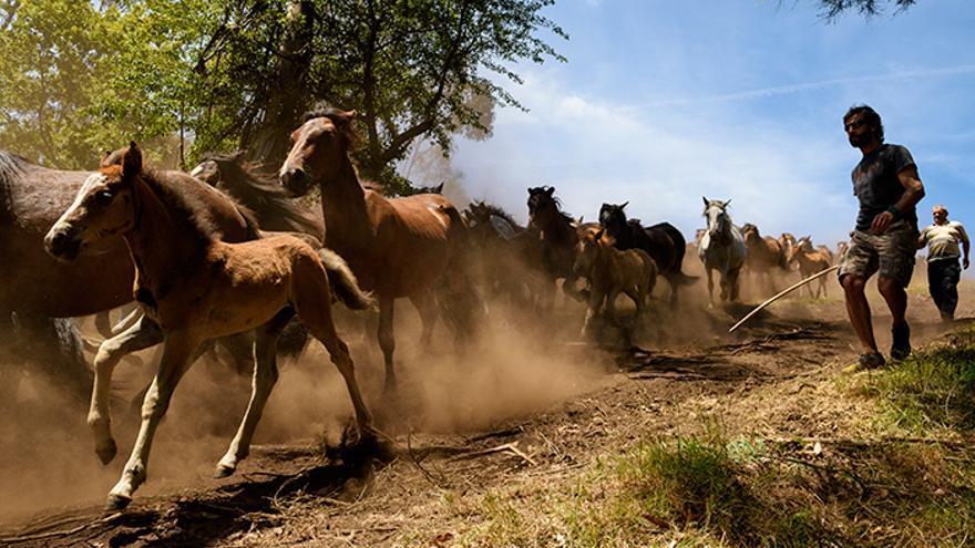 Bajada de los caballos del monte hacia el pueblo, que se realiza a pocas horas de comenzar el 'curro'. Foto: El caballo de Nietzsche