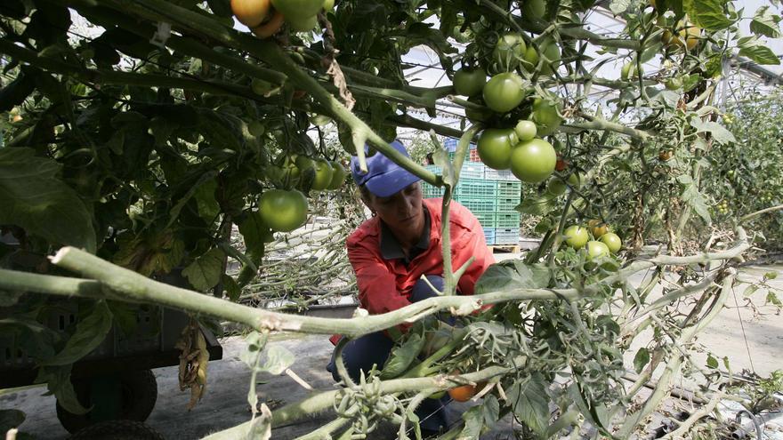 Más tomates con menos agua.