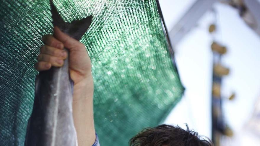 Las autoridades españolas se incautaron de 19.268 kilos de pescado de talla no reglamentaria en 2011