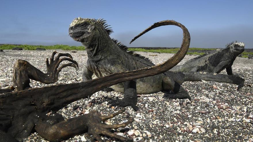 'Galapagos: Rocking the Cradle' | Thomas P. Peschak