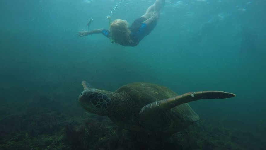 Tortuga marina en las aguas de las Islas Galápagos.