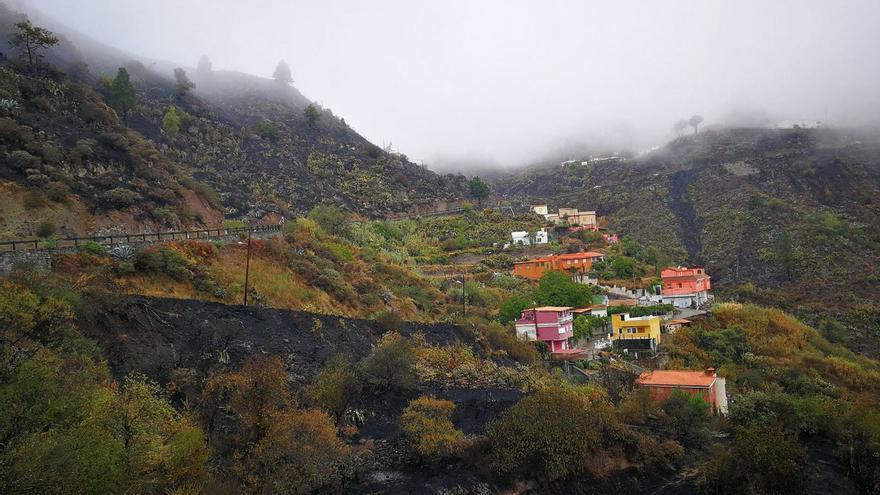 Peligro por caída de troncos en la cumbre de Gran Canaria