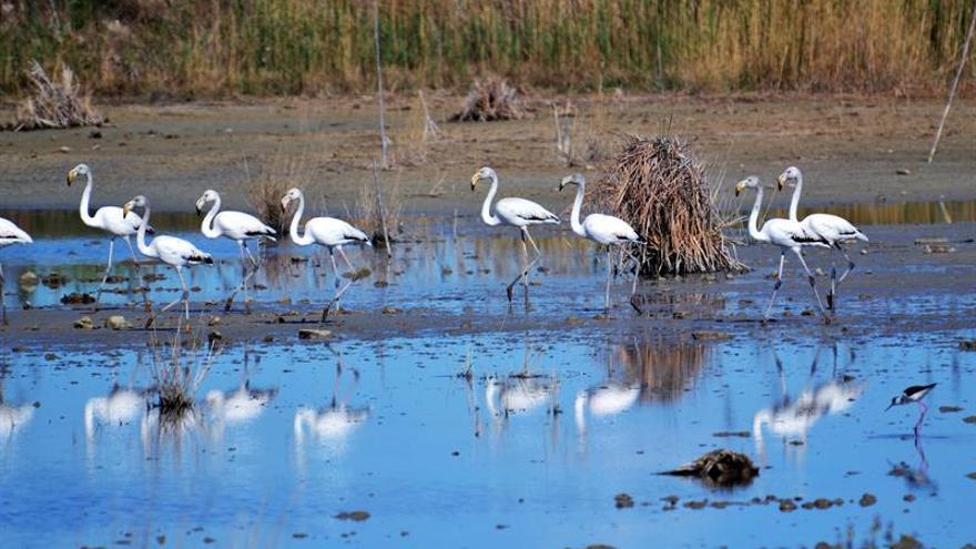 Un pretexto diminuto para un ambicioso proyecto de conservación