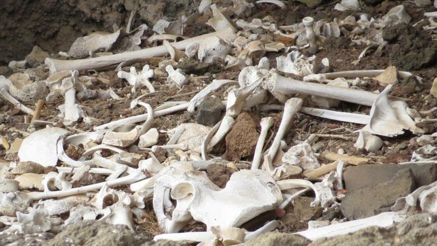 Arqueólogos canarios encuentran una cueva funeraria intacta
