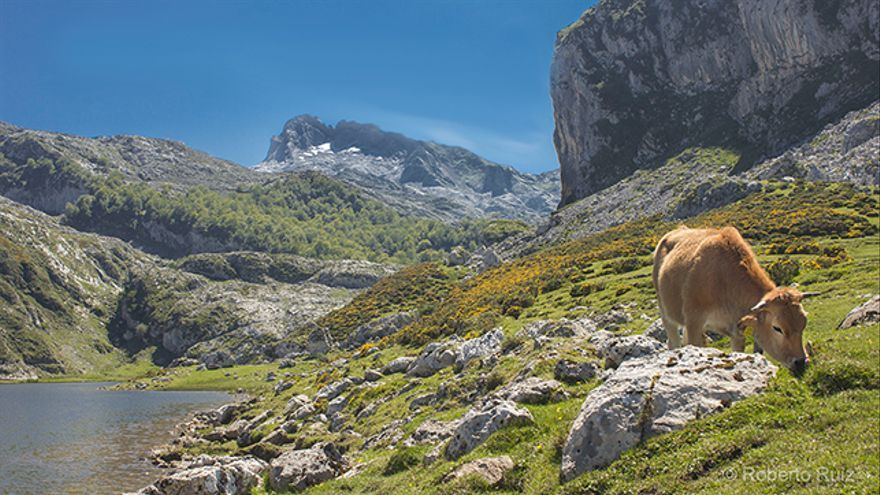 Parques Nacionales España - Picos de Europa