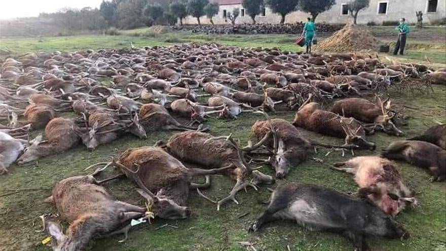Animales asesinados en una montería