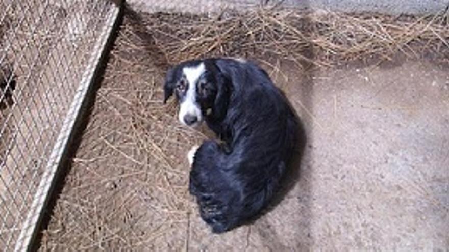 Tijarafe pide un plan contra el abandono de animales