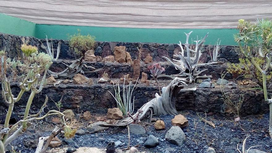 Criadero de lagartos en el Centro de Investigación de El Matorral.