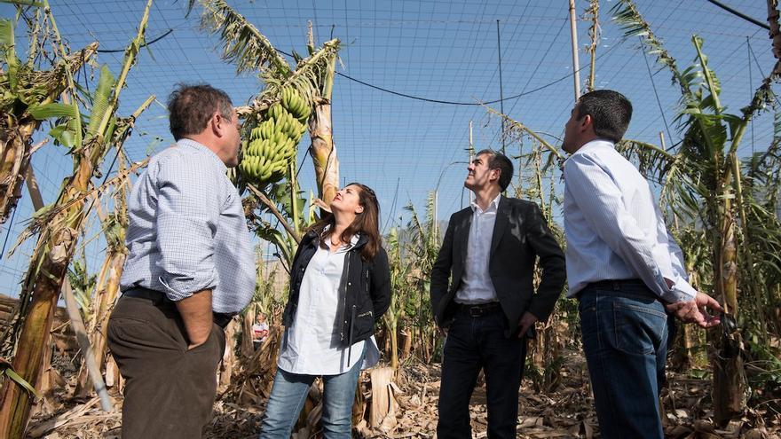 El presidente del Gobierno de Canarias, Fernando Clavijo, ha visitado  junto al consejero de Agricultura, Ganadería, Pesca y Aguas, Narvay Quintero, y la presidenta del Cabildo de El Hierro, Belén Allende, las zonas agrícolas afectadas por el temporal de viento en el municipio de Frontera.