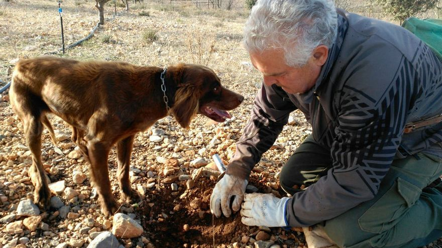 Un truficultor busca el preciado hongo con la ayuda de su perro.