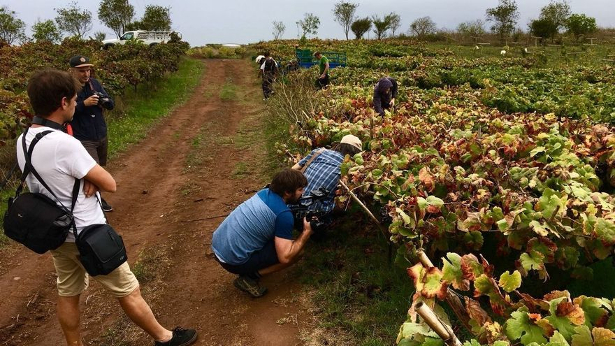 Algunos viñedos elegidos en Tenerife para las grabaciones