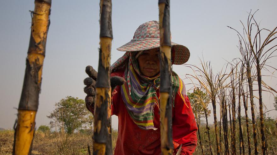 Bua Lai en los campos de caña de azúcar en Kalasin (Tailandia). / Fotografía: Laura Villadiego.