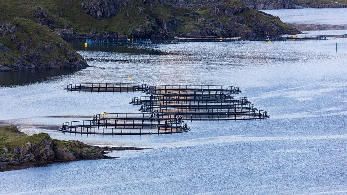 Salmoneras en Noruega
