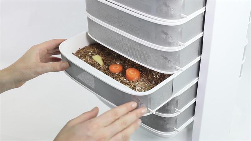 Sano y ecológico: el primer aparato para criar gusanos comestibles en casa