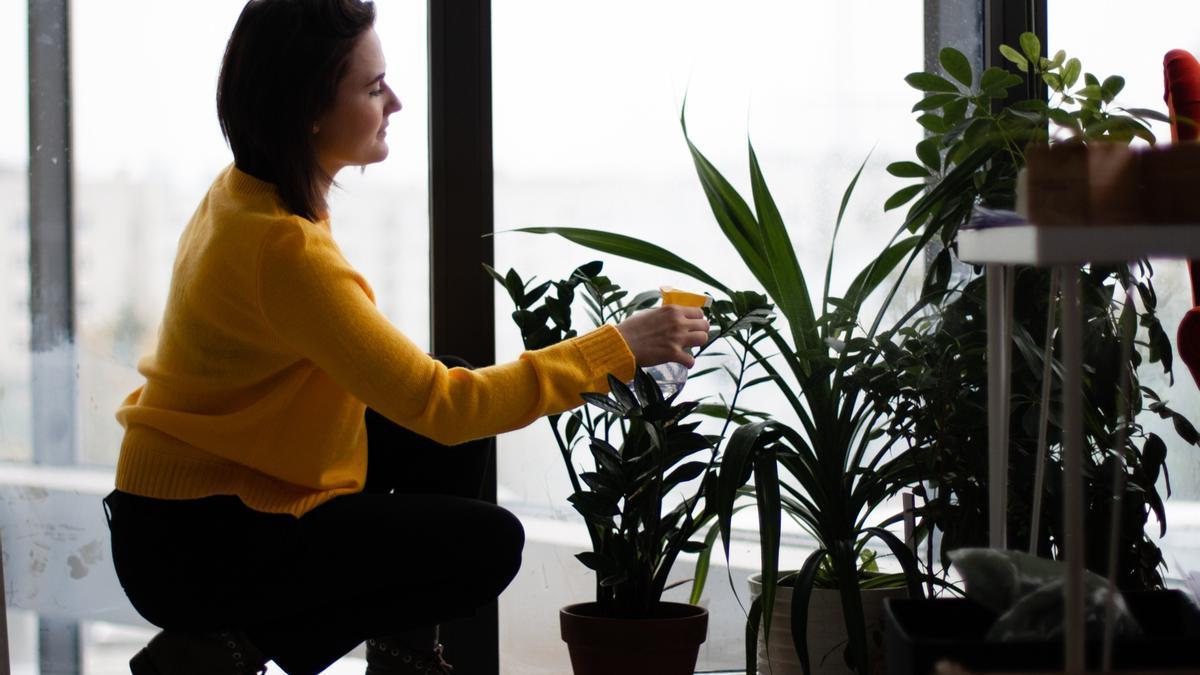 ¿Demasiadas plantas en casa? Usa estas seis reglas para organizarlas
