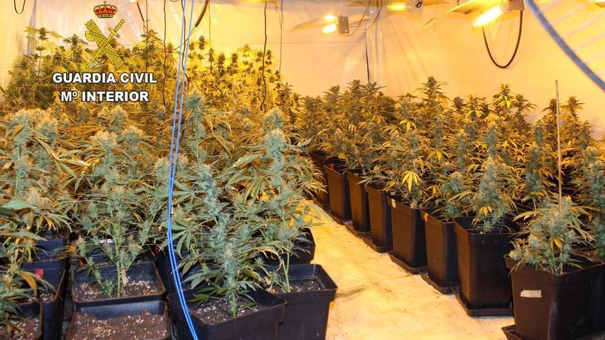 Intervenidas 448 plantas de marihuana en dos plantaciones 'indoor' en Caranceja y Cabezón