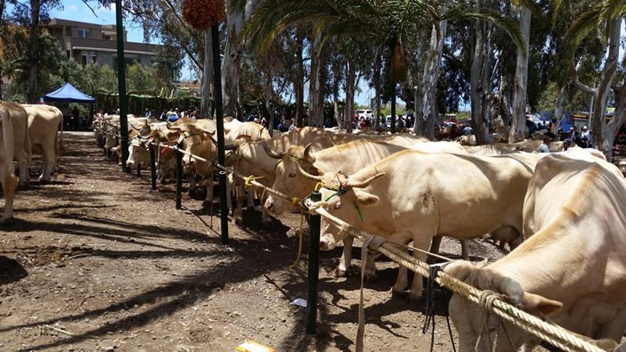 Imagen de ganado vacuno.