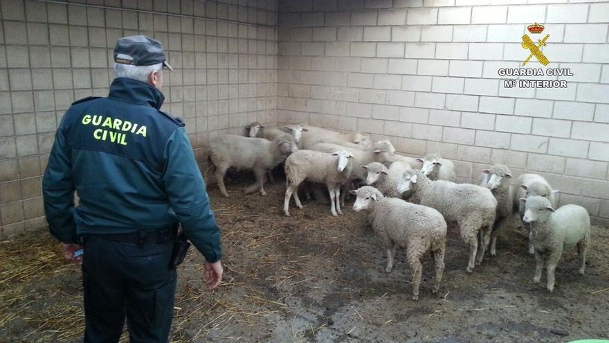 Detenidas diez personas por el presunto robo de ganado ovino y desmantelado un punto de venta ilegal