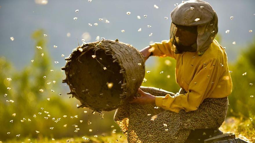 Cabildo y Filmoteca Canarias proyectan 'Honeyland' sobre la última mujer recolectora de abejas de Europa