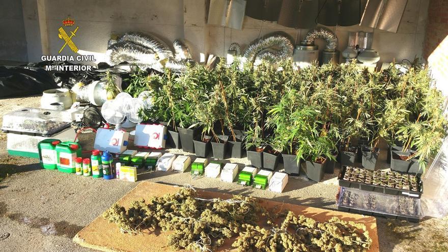 Intervenidos 475 plantas de marihuana y 3,5 kilos de cogollos en una vivienda de El Tojo
