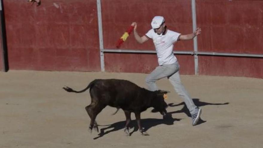Captura del vídeo de PACMA sobre becerradas de Valmojado
