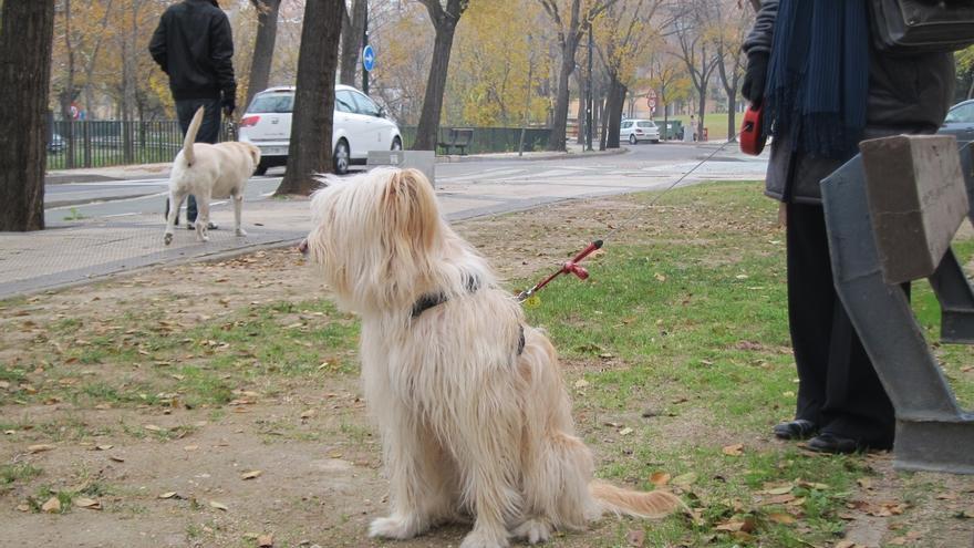 La Policía Local denuncia a 420 personas en 2014 por no recoger los excrementos de sus mascotas
