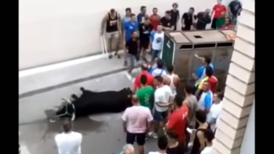Aficionados de los bous al carrer increpan a una vecina que graba la muerte de un toro