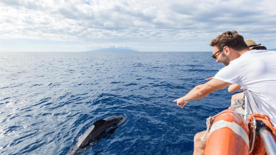 Una embarcación de recreo se acerca a un cetáceo en aguas del canal entre el sur de Tenerife y La Gomera