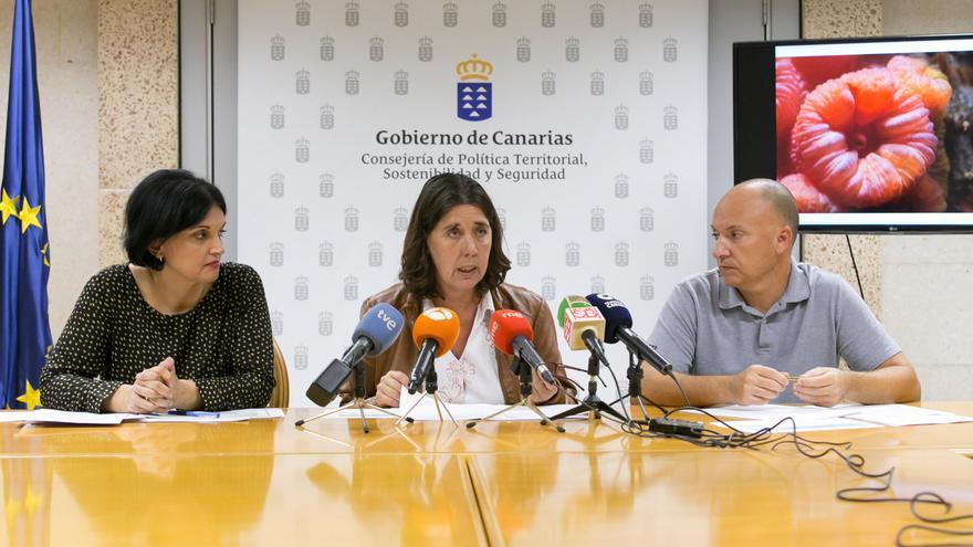 La viceconcosejera de Medio Ambiente del Gobierno de Canarias, Blanca Pérez (centro), en una rueda de prensa
