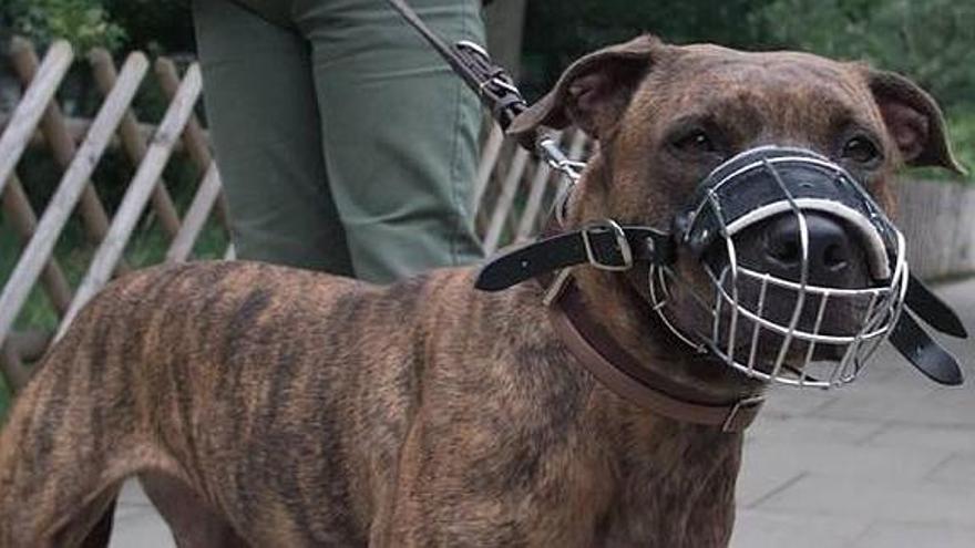 Perro con bozal, en la vía pública