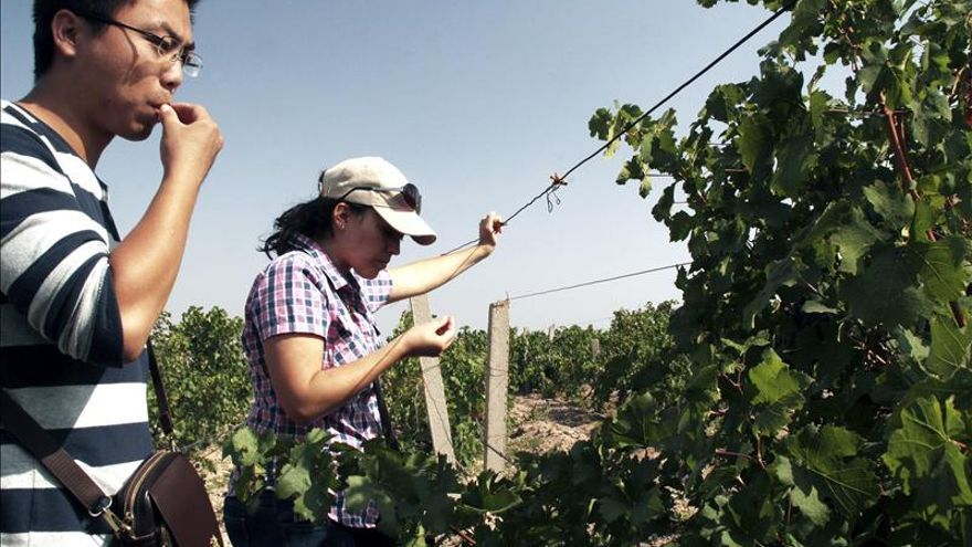 Enólogos de todo el mundo ayudan a una región china a mejorar sus vinos
