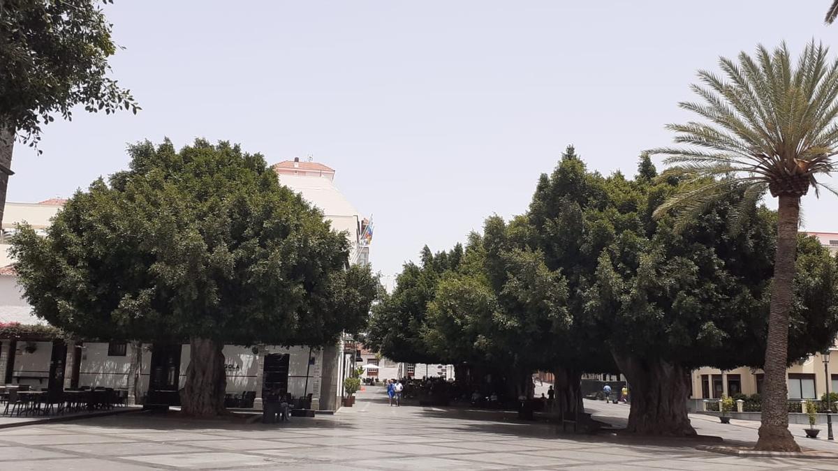 Laureles de India de la Plaza de España.