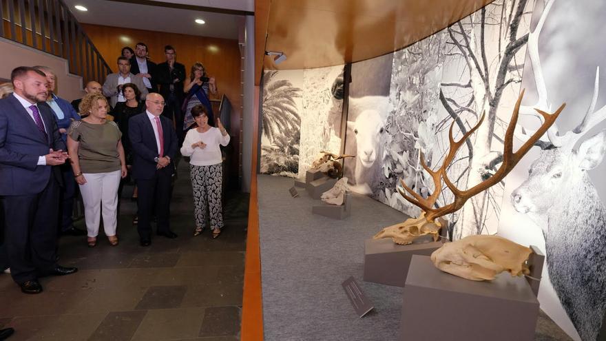 Exposición 'De Altamira a la Cueva Pintada', que simboliza el encuentro de dos yacimientos emblemáticos, separados por 33.000 años.