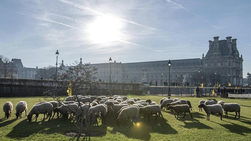 Un centenar de ovejas se refugia en París de los ataques de lobos