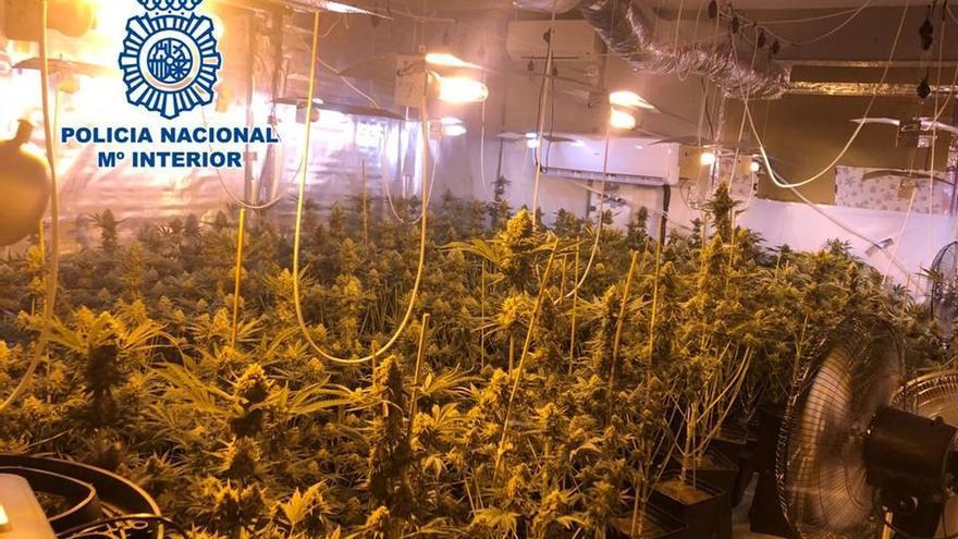 Dimite el teniente de alcalde del PP en El Valle investigado por el cultivo de 265 plantas de marihuana