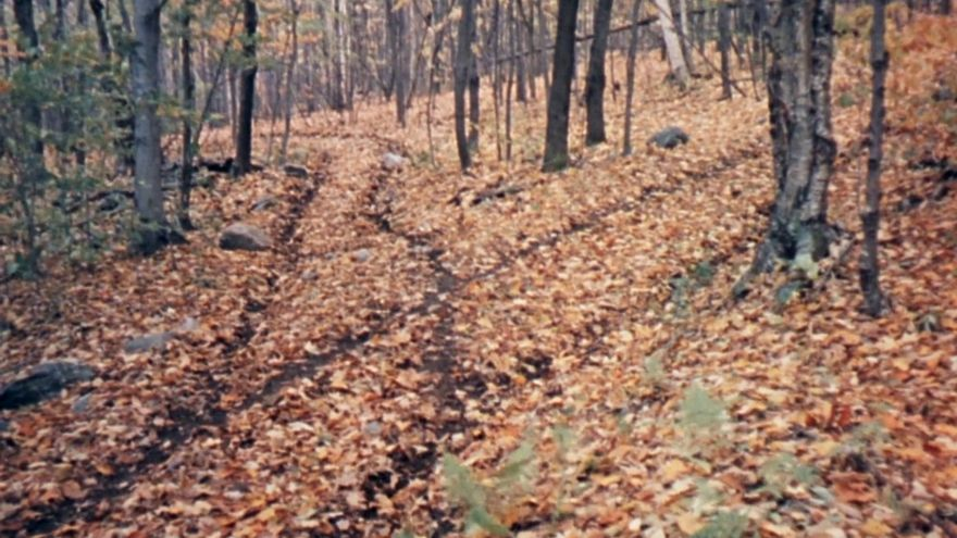 'Dos caminos se abrían en un bosque amarillo...', Fotograma de 'Robert-Frost', Sidney J. Stiber, 1961.