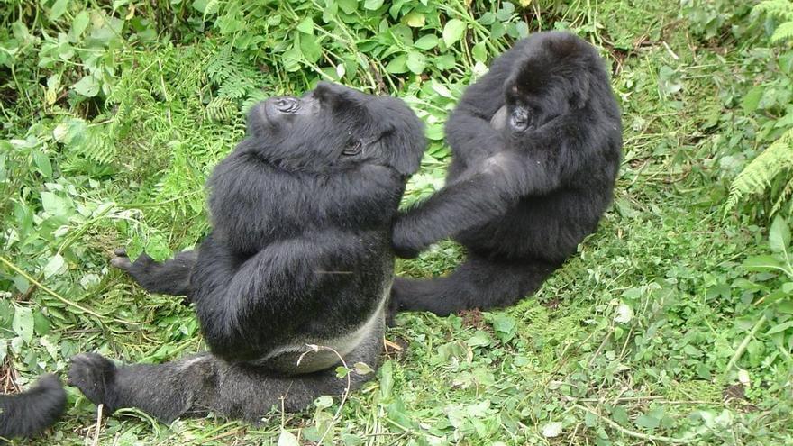 Virunga National Park - Rwanda, CC0