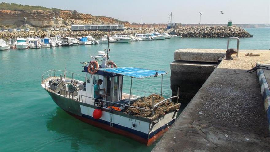 El alga invasora Rugulopterix Okamurae arruina los caladeros de Cádiz