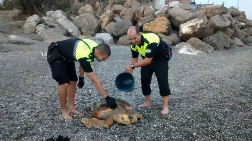 Rescatan una tortuga herida en una playa de Vélez-Málaga
