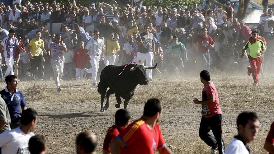 El Toro de la Vega seguirá siendo de Interés Turístico Nacional