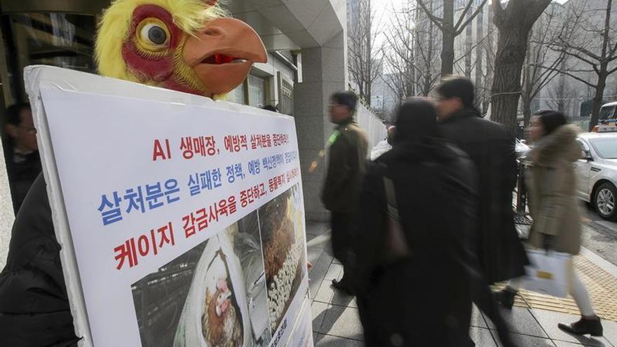 Detectan el virus de la gripe aviar en dos gatos muertos en Corea del Sur