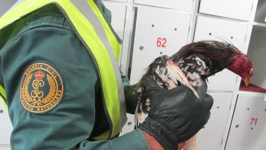 Uno de los animales recuperados por los agentes de la Guardia Civil