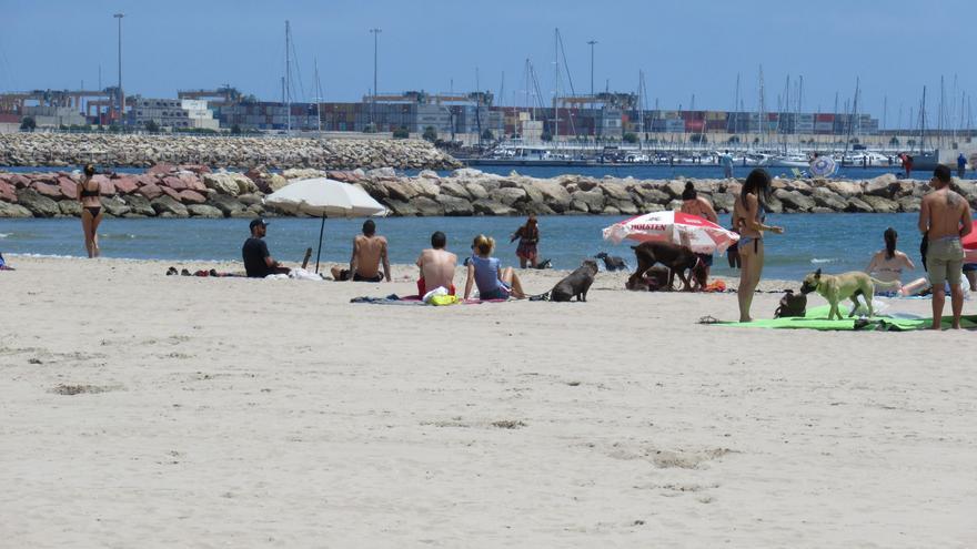 Varios bañistas junto a sus perros en la zona habilitada de la playa de Pinedo
