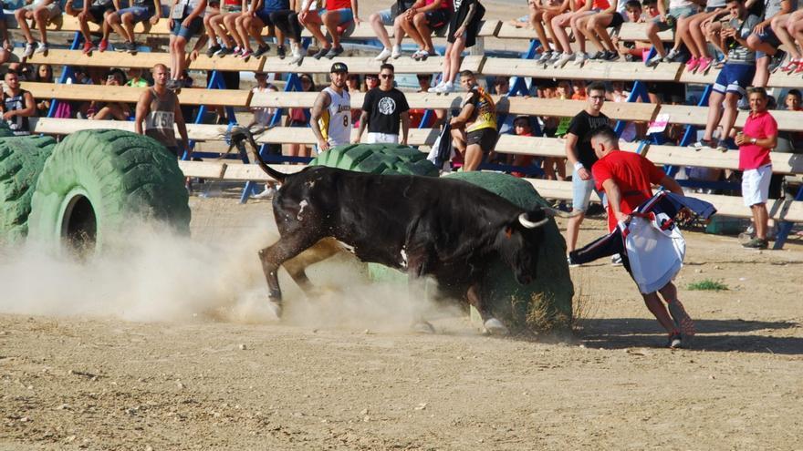Un momento de los festejos de 'bous al carrer' en Pinoso el pasado mes de julio