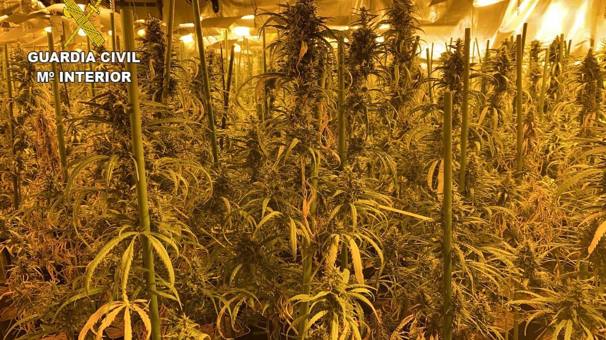 Una de las plantaciones 'indoor'