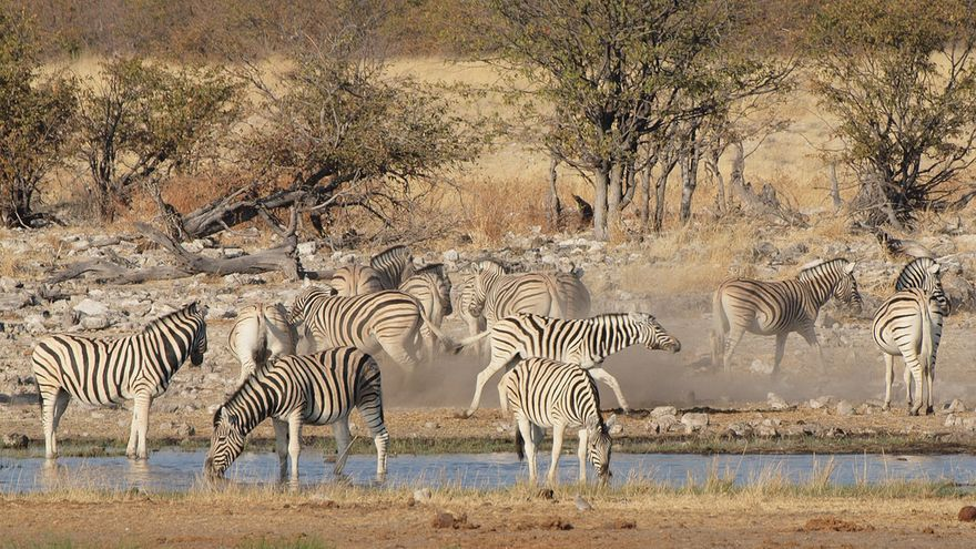 Abrevadero en el Parque Nacional de Ethosa. Gustavo Jeronimo