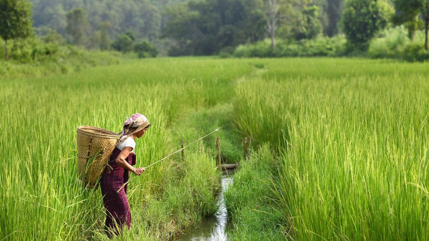Las mujeres representan el 43% de la mano de obra agrícola y generan hasta el 80% de la producción de alimentos