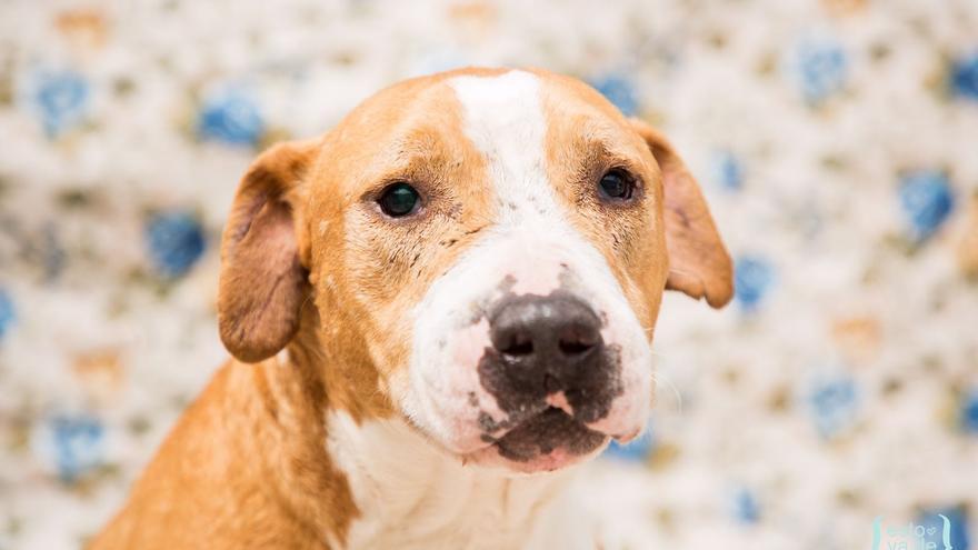 Brutus lleva dos años y medio en la perrera.